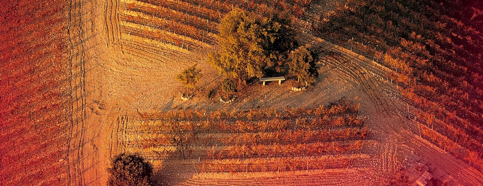 Nuestras viñas del Somontano